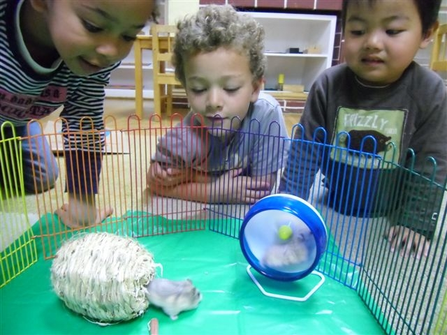 kids_looking_at_hamster